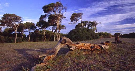 Albufera naturpark i Valencia