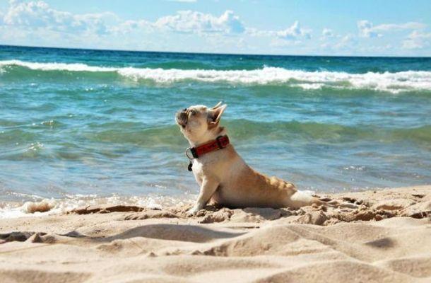 El Ejido stranden Fuengirola