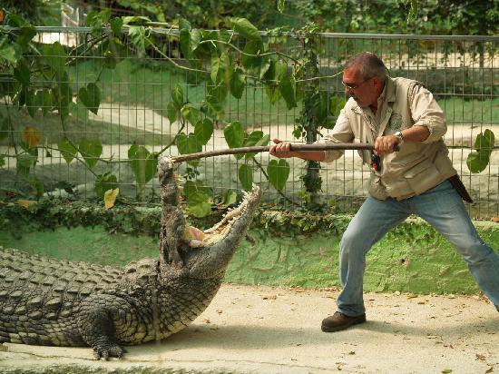 Krokodilleparken i Torremolinos