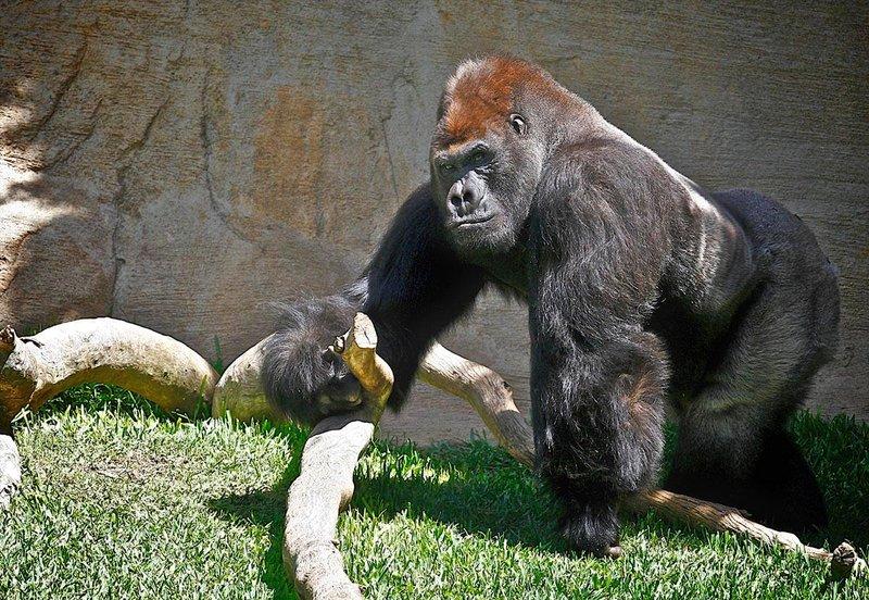 Zoo Fuengirola i Malaga