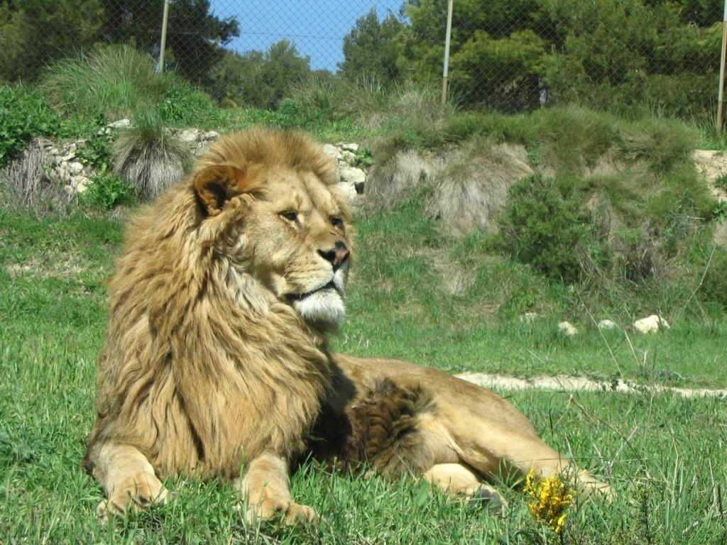 Reisetips i Spania Safari Aitana