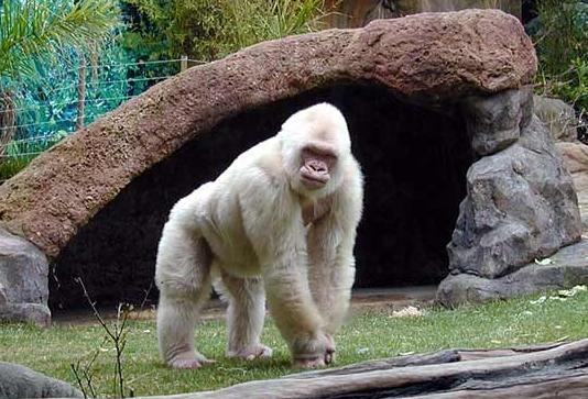 Barcelona Zoo i Barcelona