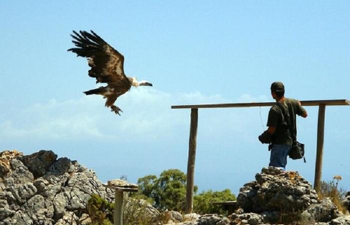Jardin de las Aguilas i Benalmadena